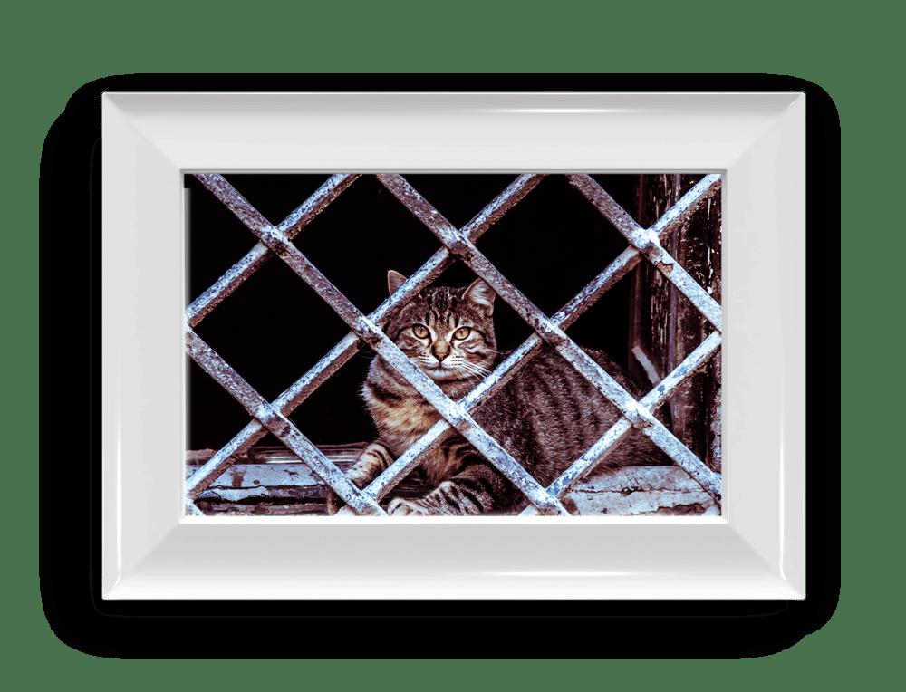 relato sobre la ausencia y un gato