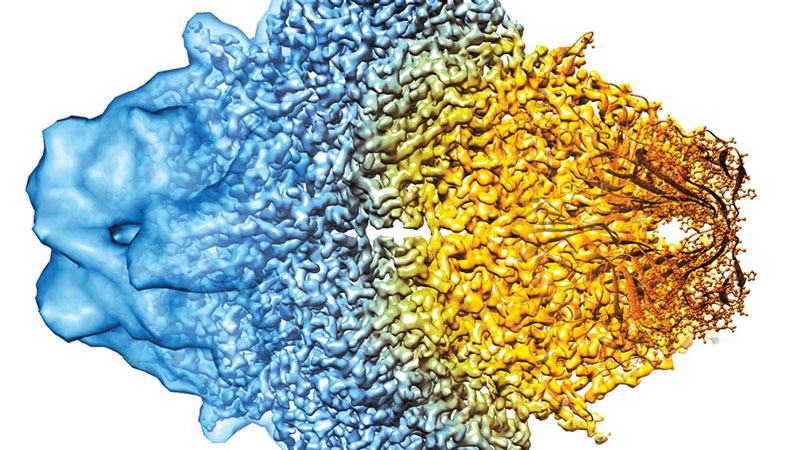 A composite cryo-EM image shows increasing resolution from left to right.