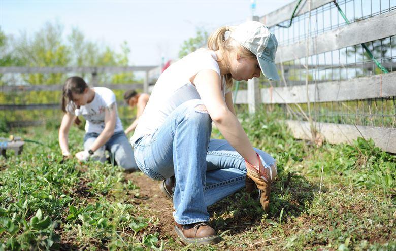 UK FARM WORKER VISA scheme   VISA GURU