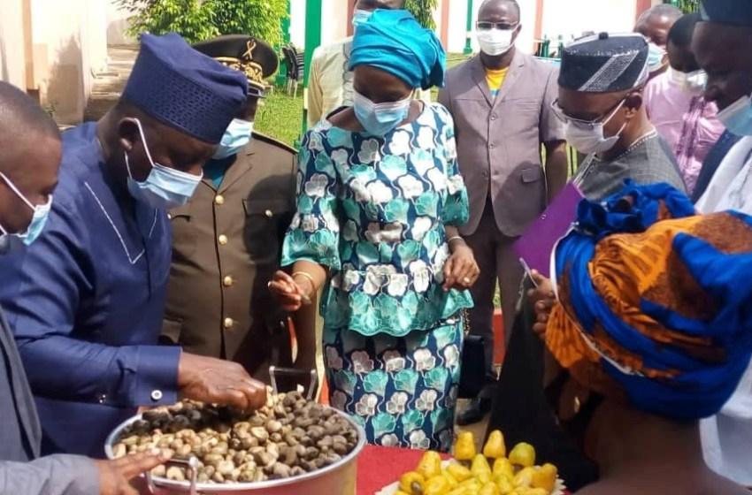 Commercialisation 2020-2021 des noix de Cajou: 300 FCFA/kg, le prix plancher d'achat