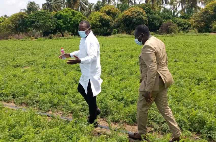 Bénin/Agriculture: La campagne agricole 2021-2022 lancée