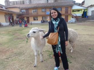Llama at Cusco visaparaviajar.com