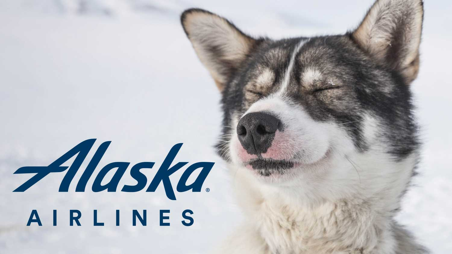 Following new DOT rules, Alaska updates its policy on service animals onboard.