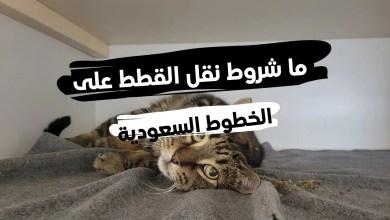 جواز سفر القطط السعودية ... وما شروط نقل الحيوانات على الخطوط السعودية