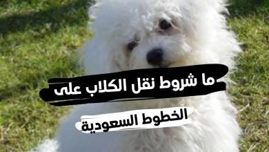 جواز سفر الكلاب السعودية ... وما شروط نقل الحيوانات على الخطوط السعودية