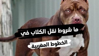 جواز سفر الكلاب المغرب ... وما كيفية استخراج جواز سفر للحيوانات في الخطوط المغربية
