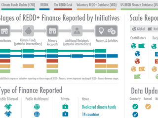 REDD Initiatives Infographic