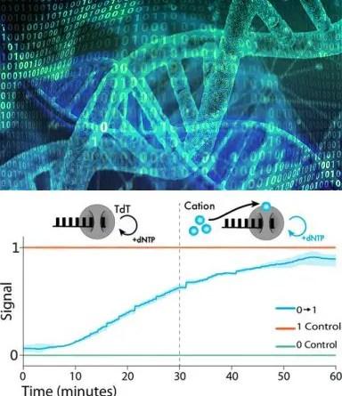DNA poder se tornar o menor HD do mundo
