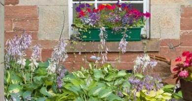 11 jeitos de criar jardins em espaços estreitos e aproveitar as laterais da casa 05.webp Vision Art NEWS