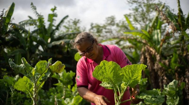 Conceito de agroecologia abarca desde técnicas de cultivo de alimentos até valores éticos – 22/10/2021 – Comida