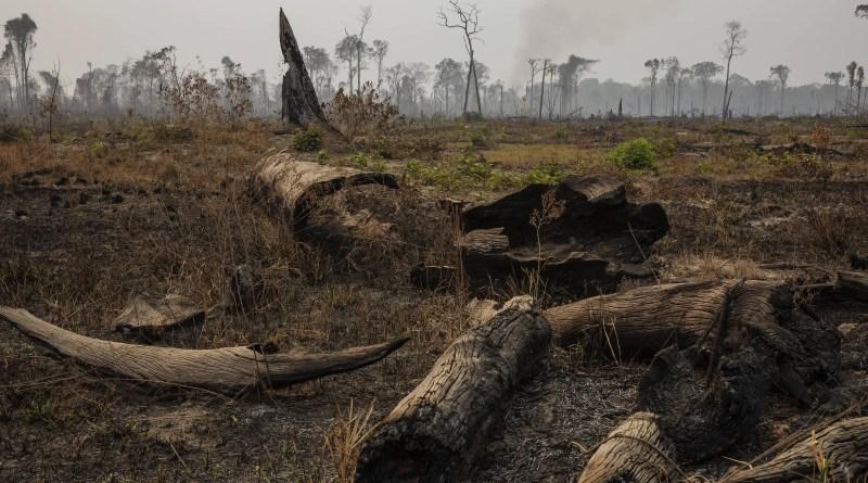 União e Ministério do Meio Ambiente são processados por 'pedalada climática' – 27/10/2021 – Ambiente