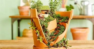 30 ideias de jardins externos com suculentas 21 Vision Art NEWS