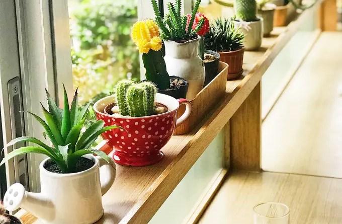 5 o guia completo para escolher o melhor vaso para suas plantas Vision Art NEWS