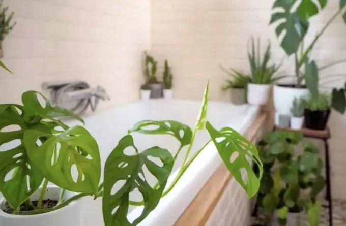 8 plantas que se dão bem em locais úmidos, como o banheiro
