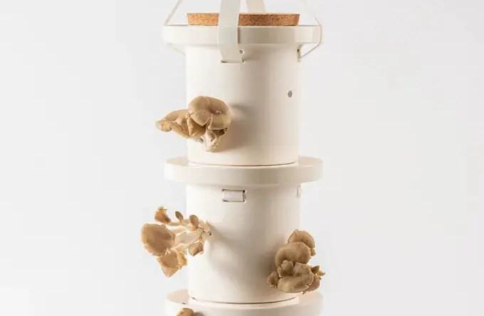 cultive seus proprios cogumelos com este jardim casa.com designboom klil etrog 3 Vision Art NEWS