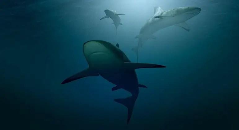 Tubarões confundem surfistas com suas presas animais, aponta estudo – Notícias