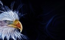 Bald_eagle_head