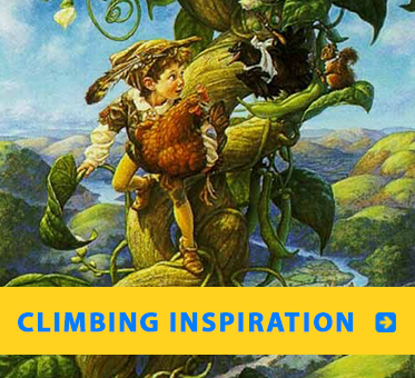 Scott Gustafson's illustration showing Jack high up the beanstalk links to Daniel Kish explains the inspiration for his love of climbing trees.