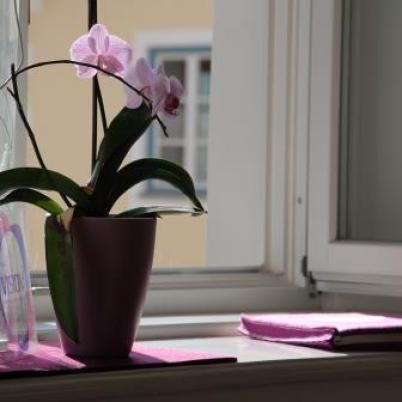 Orchiedee am VISION³ Fenster