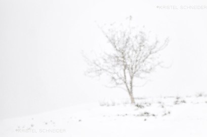 Kristel-Schneider_Inspired-by-a-single-tree_11