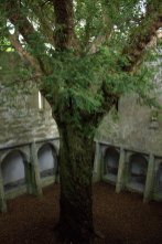 19. Muckross Abbey, Kerry, Ireland