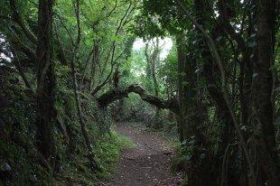 02. Mihanboy Portal Tomb, Roscommon, Ireland
