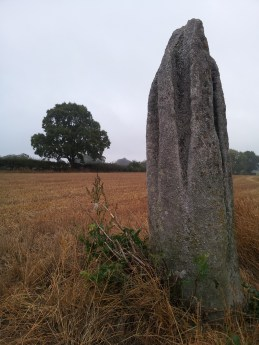 03. Ardristan Standing Stone, Co. Carlow