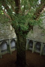 19. Muckross Abbey, Kerry, Ireland