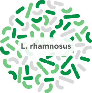 Lrhamnosus 298x300 1