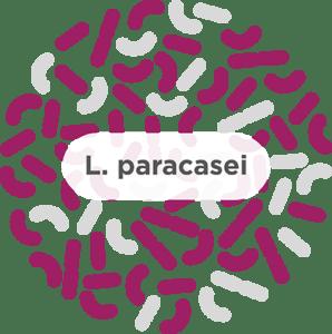 blog l paracasei 298x300 1