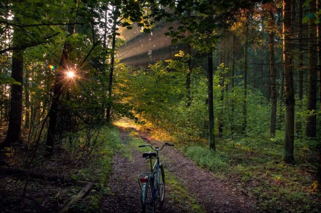 Beautiful nature of Belarus. Forest bike path