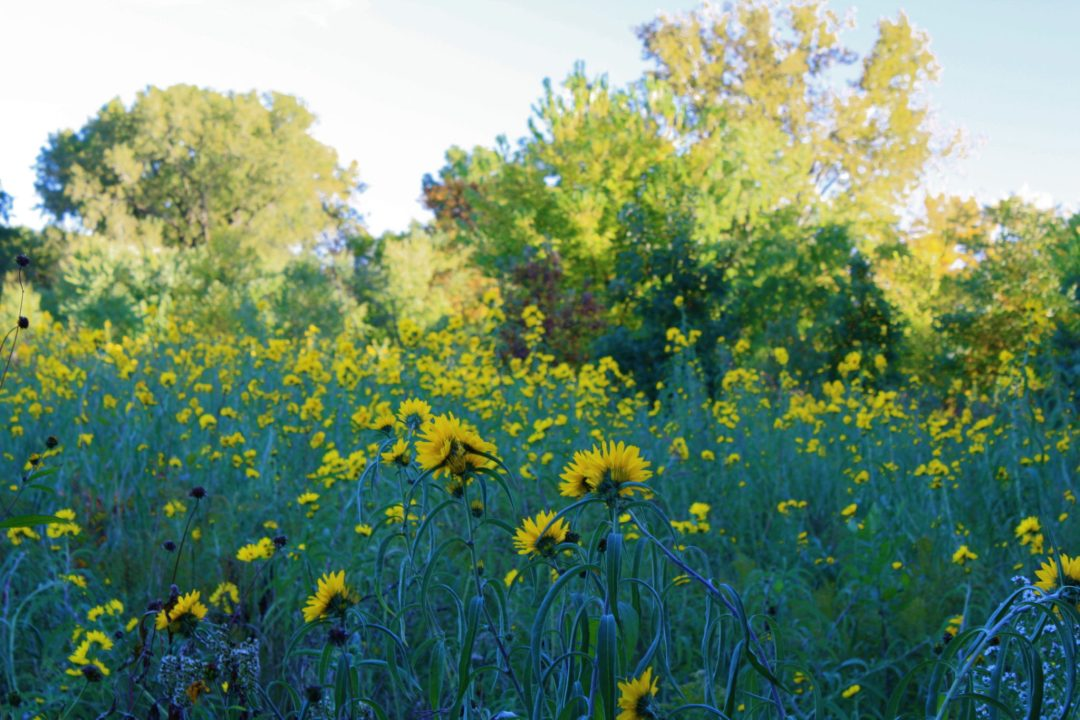 "Wildflowers Photo by <a href=""https://flic.kr/p/as2PL2"" target=""_blank"">NatureNerd/flickr</a>"