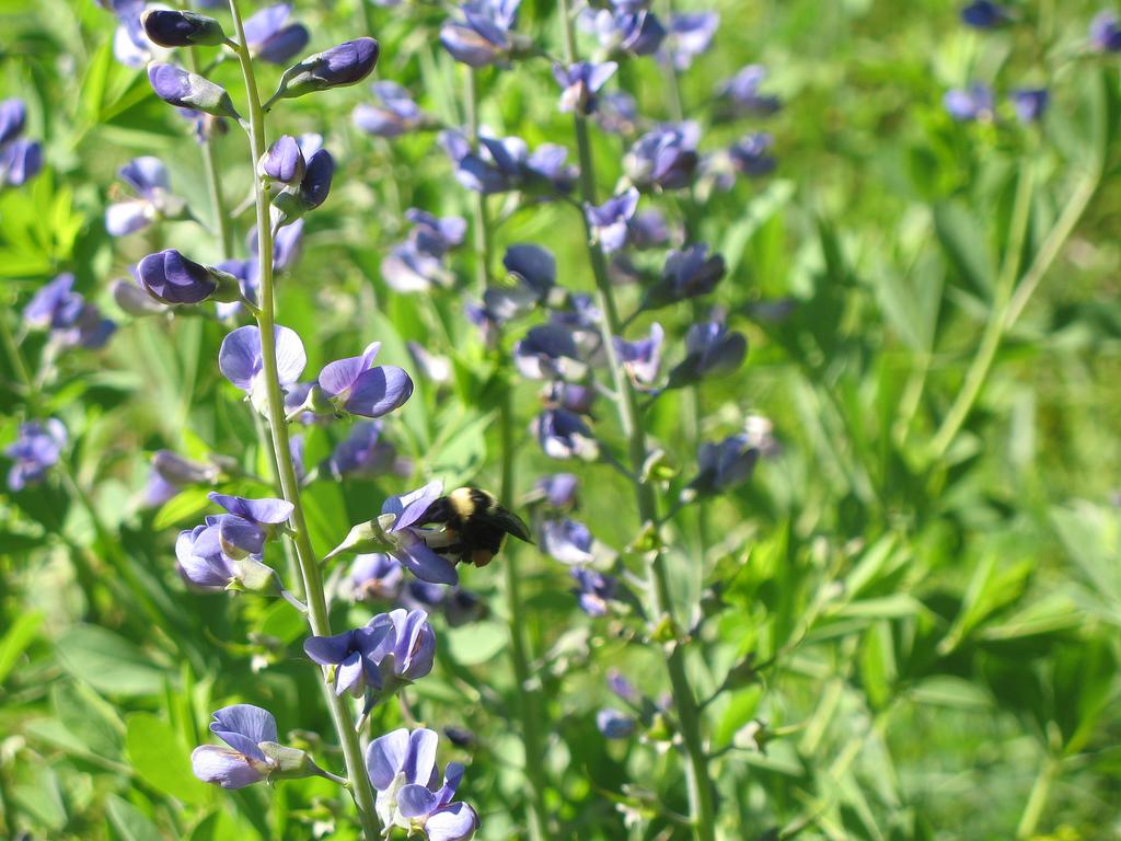 """Eloise Butler Wildflower Garden. Image by <a href=""""https://flic.kr/p/2bSQ1y"""" target=""""_blank"""">jpellgen/flickr</a>"""