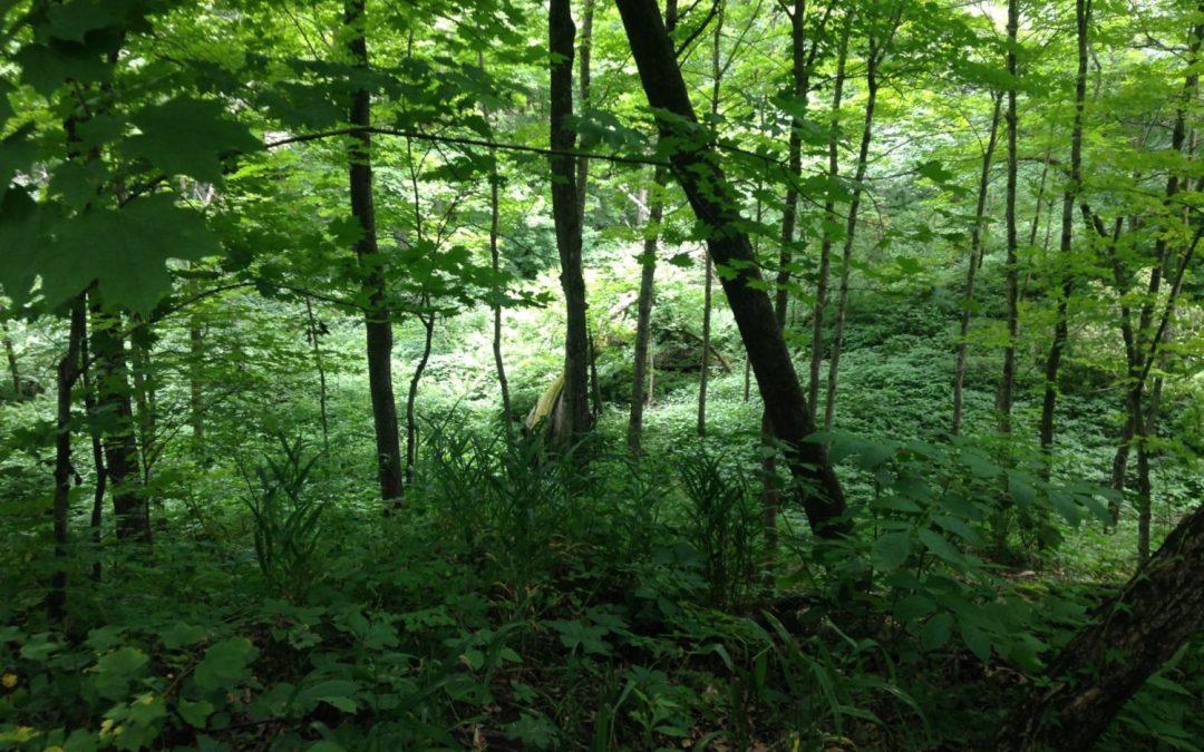 Nerstrand Big Woods State Park