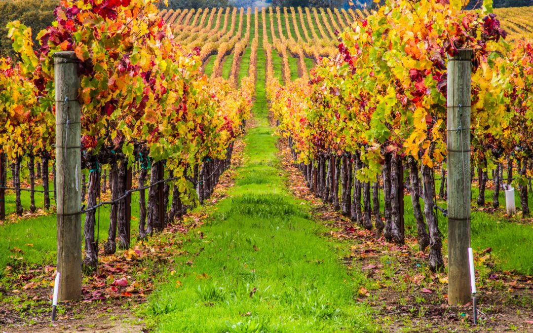 Winery Day Trips to Take this Fall