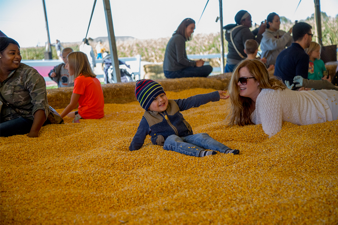 Families with young children playing in a pool of corn kernels at Sever's Fall Festival, one of the many fall festivals in the Twin Cities.