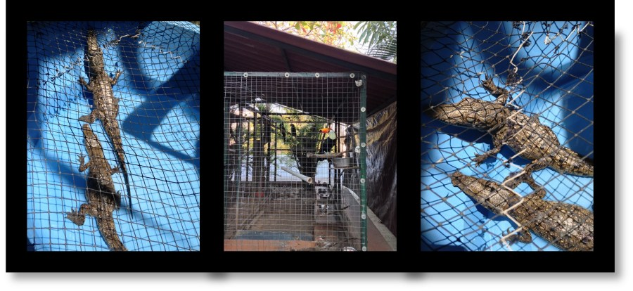 El Cora Crocodile Sanctuary near Puerto Vallarta