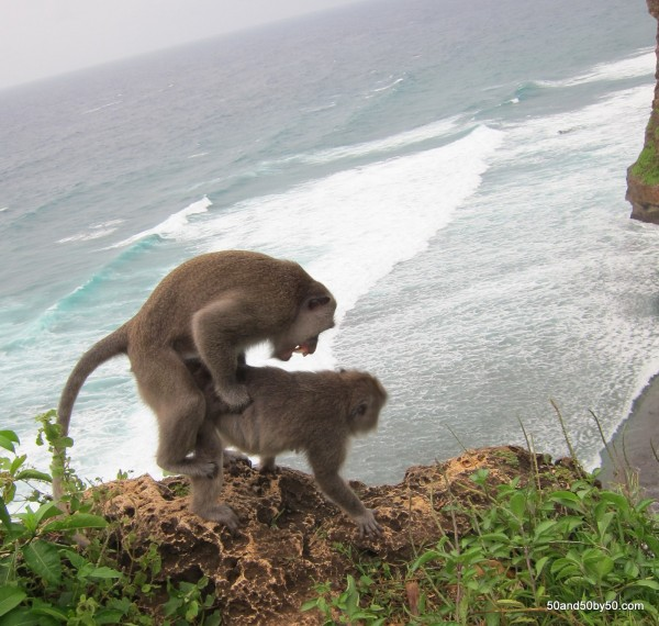sex Picture having of monkey