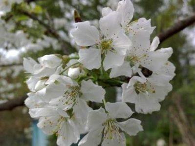 Flores en el día de San Bernabé y el tredesin de mars