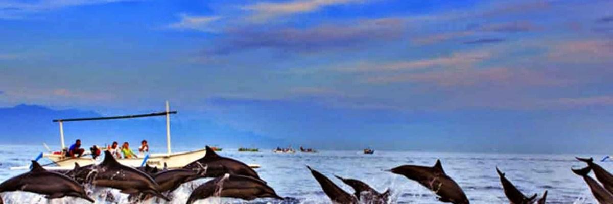 lovina dolphin