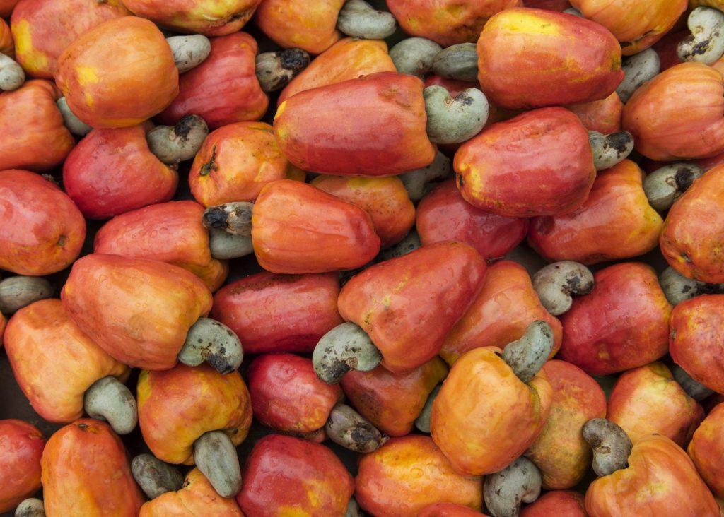 Brazilian cashew fruit
