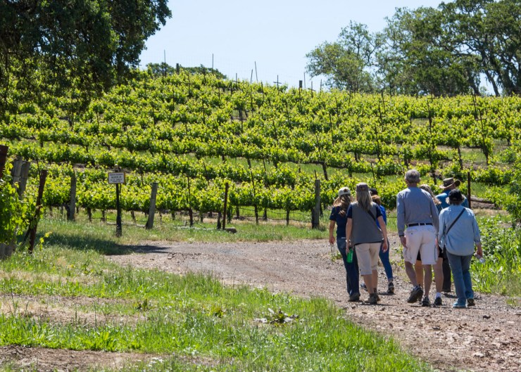 Jordan Winery Hike is part of the One Week in the Russian River Valley