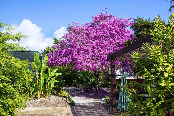 los_angeles_county_arboretum