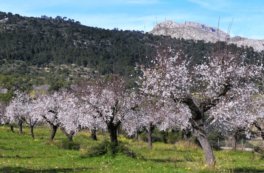 paseos en pareja, calvià en pareja, senderismo, hiking, Mallorca, Calvià, Finca Galatzó