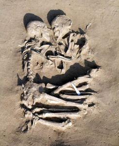 SkeletonLoversItalian