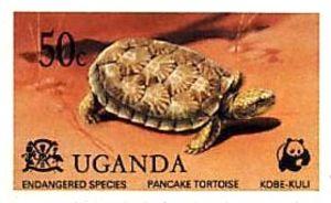 TortoisePancakeEndangered1978.01