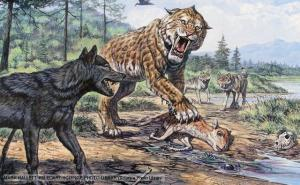 Dire Wolf (Canis dirus) (left) and Smilodon (Sabertooth Tiger) at La Brea Tar Pits, California.