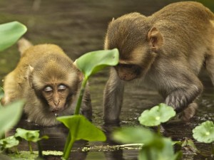Wild Tarzan Monkeys Sweep Across Florida