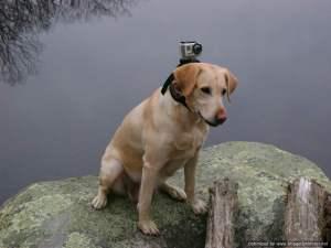 DogCamera