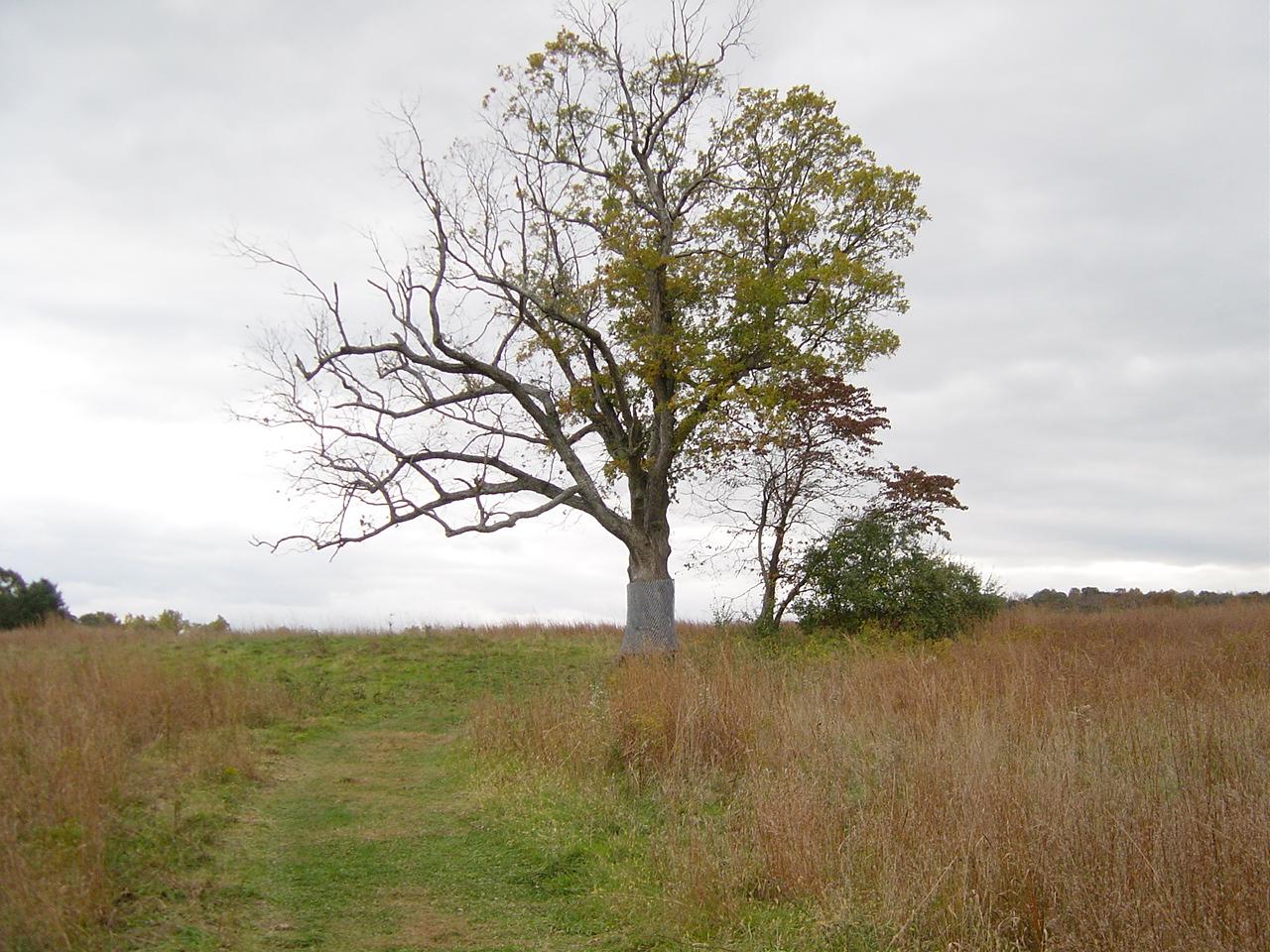New Jersey's Devil Tree